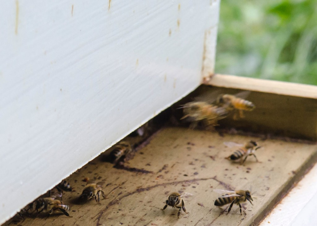 BeesCloseSCottCormanWEB